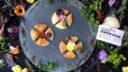 エディブルフラワーと楽しむ焼きカチョカヴァッロ|フードスタイリング