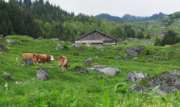 Alp_Scheidegg_06