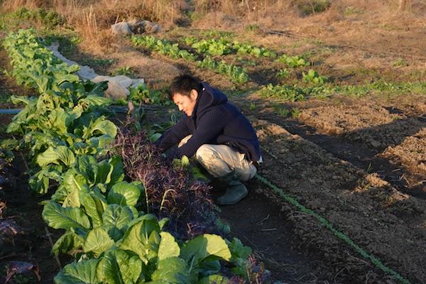 藤田承紀さんの畑