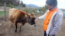 日本一小さな牧場は、牛乳大好き少年の夢から生まれた《牧歌 前編》