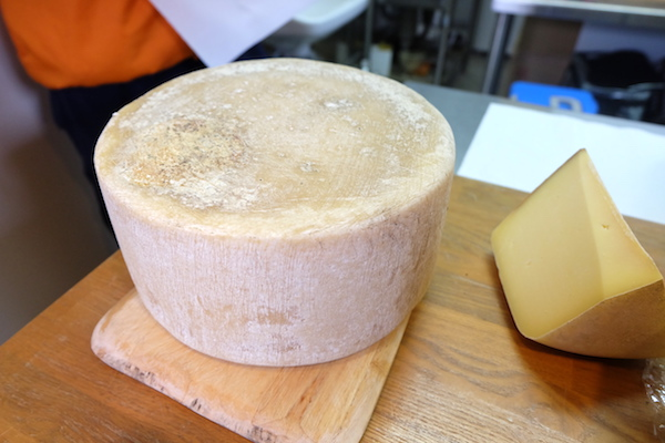 hard type cheese of bocca