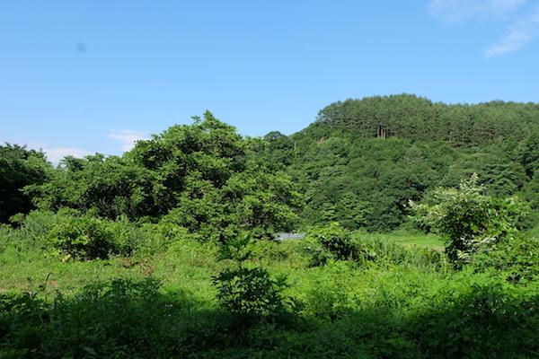 bosqueso_10