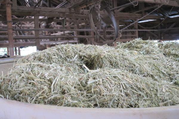 増田牧場の牛用飼料
